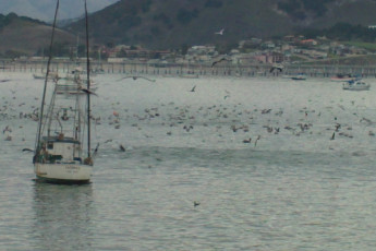 HI - San Luis Obispo : Harbour Local to San Luis Obispo Hostel, USA