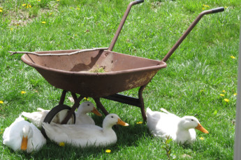 HI - Lucas - Malabar Farm : Duck Barrow at Lucas - Malabar Farm Hostel, USA