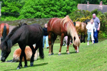 YHA New Forest : Horses at the YHA New Forest hostel in England