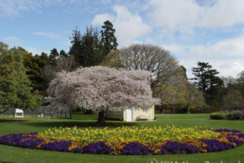 YHA Christchurch Rolleston House : Gardens near the Christchurch, Rolleston House Hostel in New Zealand