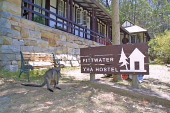 Sydney - Pittwater YHA : Wallaby next to sign for the Sydney - Pittwater YHA hostel in Australia