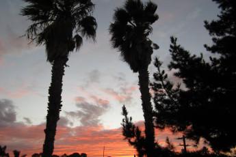 HI - San Diego - Point Loma : jardines de la HI - San Diego - Point Loma hostal en los Estados Unidos