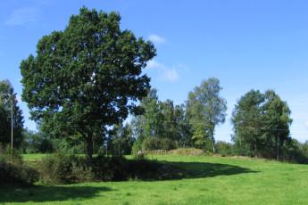 Ljungby/Södra Ljunga : Garden of the Ljungby/Sodra Ljunga hostel in Sweden