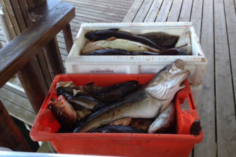Ballstad : Local Fishing at Ballstad Hostel, Norway
