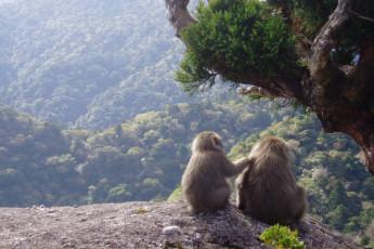 Yakushima - Yakushima YH : natural de paisaje que rodea Yakushima - Miyanoura puerto Youth Hostel, Japón