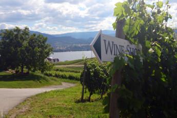 HI - Penticton : Vineyard