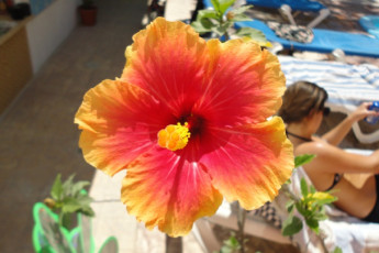 Sayulita - The Amazing Hostel Sayulita : 092659,Sayulita,Hostel,Mexico, Flowers