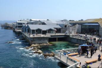 HI-Monterey : Aquarium