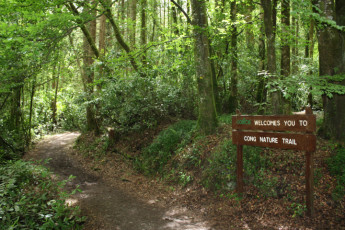 Cong -  Co Mayo YHA : Nature trail