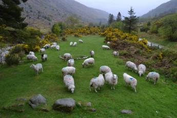 Glenmalure - Co Wicklow YHA : Gardening at Glenmalure Hostel