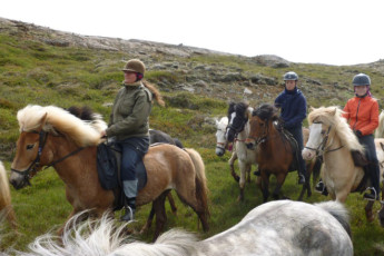 Húsey : Husey Hostel Iceland - Horse riding in Iceland