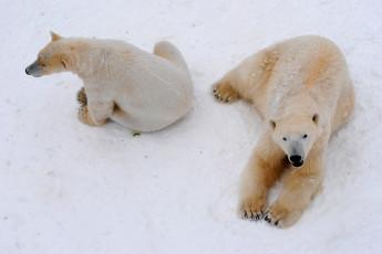 Orsa : bearpark