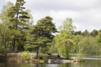 Stockholm - Hellasgården : X283043, Stockholm - Hellasgården hostel, lake at hellas image