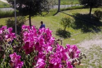Perugia - Mario Spagnoli : hostel, 031085, ostello Spagnoli Perugia, italia, giardino