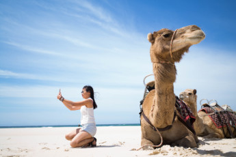 Port Macquarie YHA - Ozzie Pozzie Backpackers : Camel