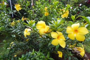 La Fortuna - Jardines Arenal : Jardines
