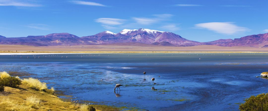 San Pedro de Atacama has a spectacular landscape and is home to an abundance of flamingos.