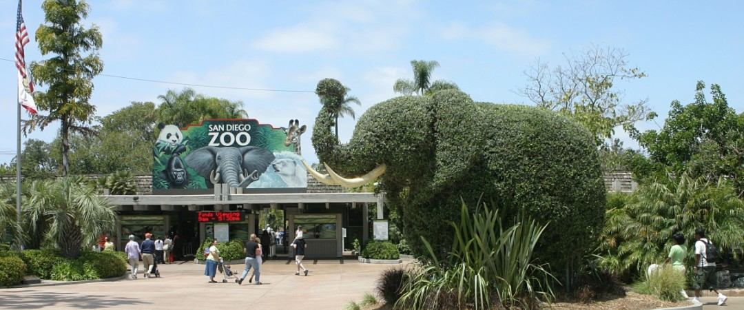 Visit an animal kingdom in the heart of San Diego and get up close to some of the rarest species in the world.