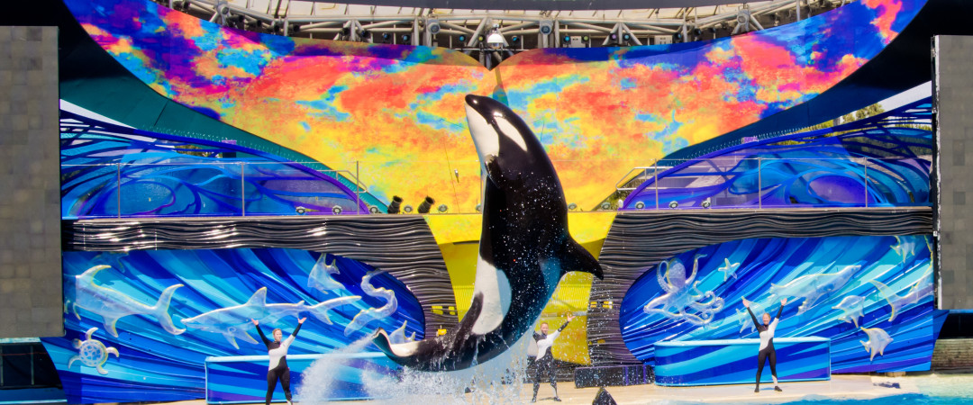 Take a one-of-a-kind journey to San Diego's SeaWorld and celebrate the wonders of the sea at an amazing mammal show.