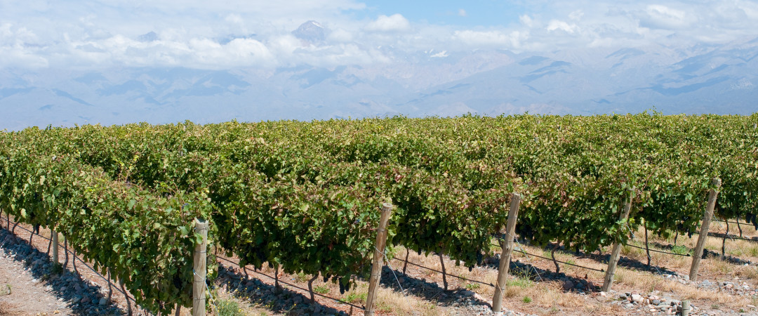 Mendoza is famous for its delicious wines, so why not take a wine tour and visit a vineyard.