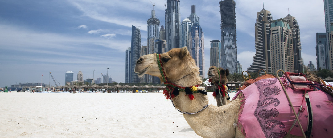 Dubai has some of the whitest and sandiest beaches in the world, whether you want to soak up the sun, try out water sports or ride a camel.