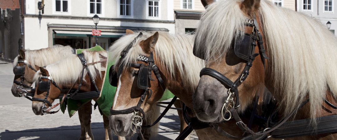 Try something different, hire a pony and walk with it through the charming old streets.