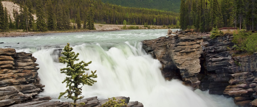 Visit the dramatic Athabasca Falls where massive quantities of water are plunged into the gorge below, making for a spectacular sight.