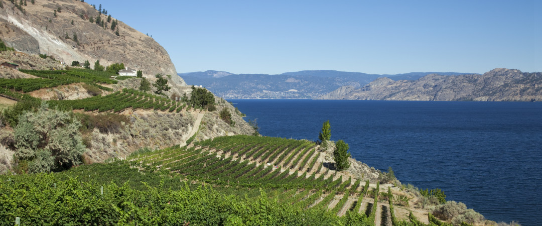 The Okanagan Valley is famous for its wine festival - our hostel can organise a winery tour to get you acquainted.