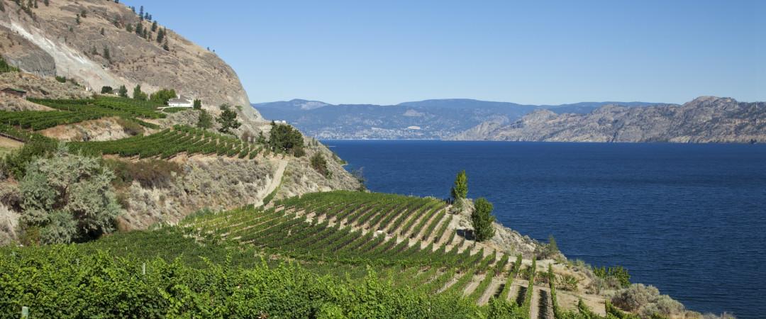 El valle Okanagan es famosa por su festival del vino - nuestro hostal puede organizar una visita a la bodega para hacerle conocer.