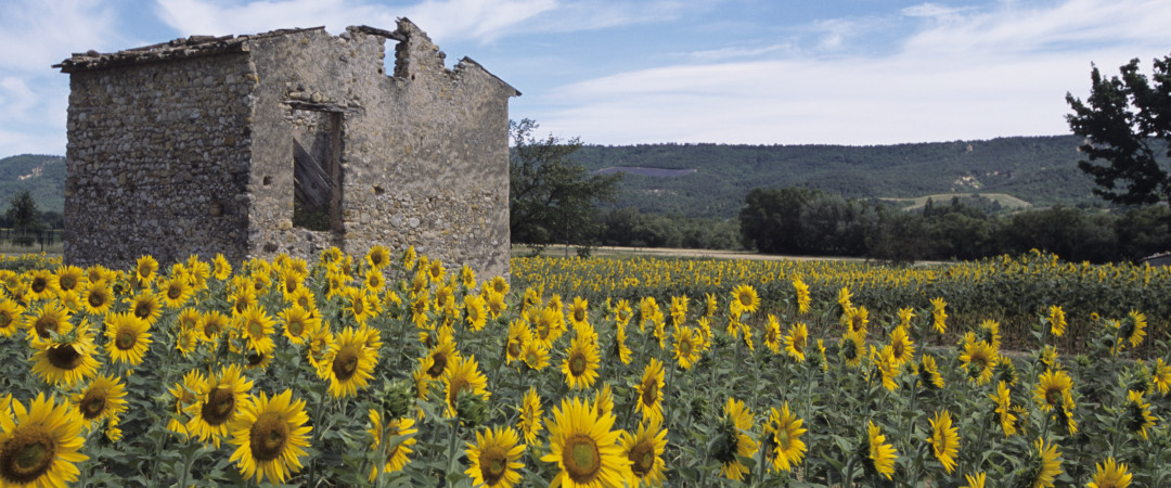 Sunflowers and sun - what more do you need? Kick back and relax in gorgeous Provence where you can do as much or as little as you fancy.