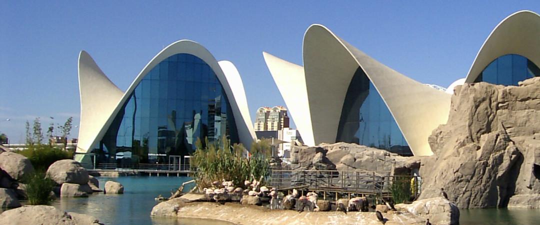 El hostal Valencia KΛ13 está a una corta distancia de el Oceanográfico, el acuario más grande de Europa, lo que lo convierte en un lugar de visita obligada para cualquier visitantes.