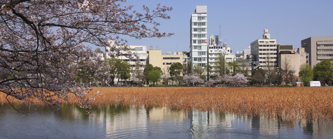 Take a peaceful stroll around Ueno Park, admire its famous cherry blossoms, traditional architectural views and visit nearby museums.