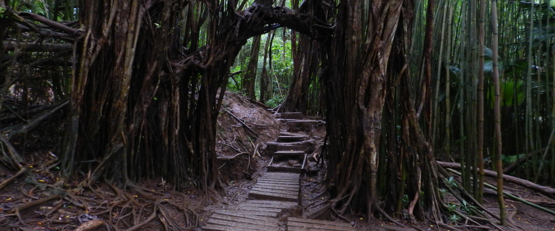Take a Manoa Falls trail and get the chance to see movie scene locations from Jurassic Park and Lost.