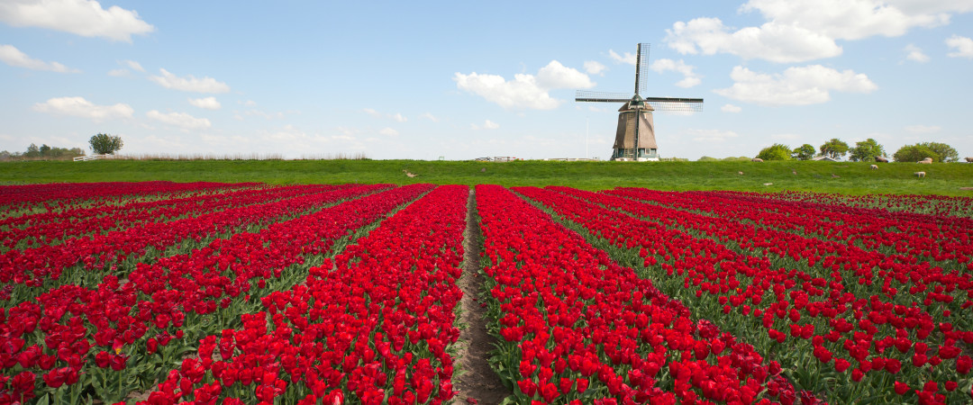 Windmills and tulip fields are enough to make anyone smile - plus delve into the many museums and galleries of Haarlem.