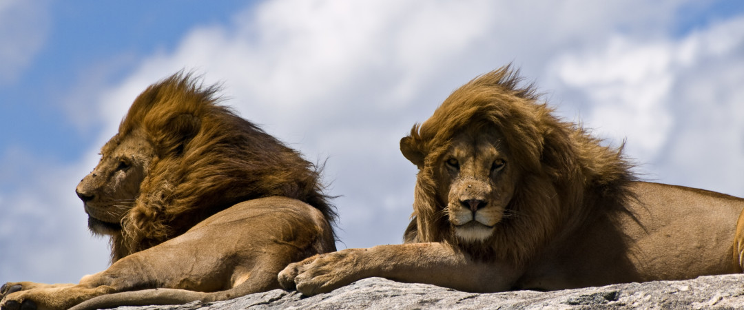 Take a safari through Kruger National Park and experience a thrilling day seeing lions, zebra and elephants up close.