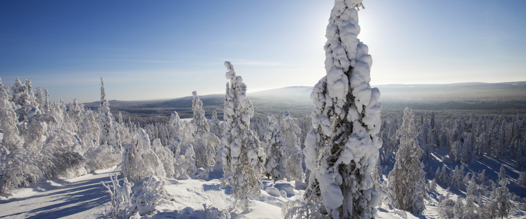 Blanketed by snow and abundant with lush scenery, Lapland is a dream destination for many.