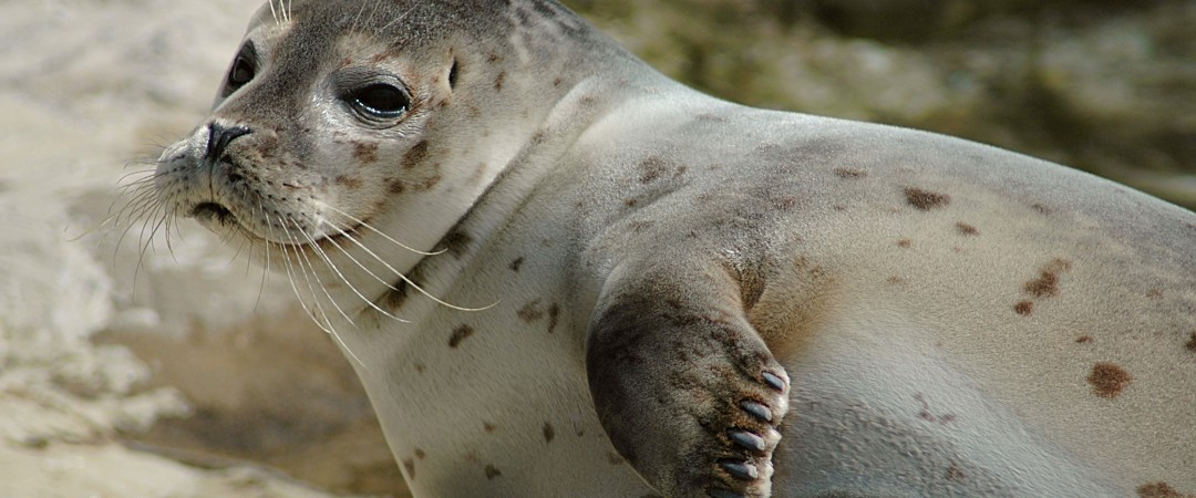 The Wadden Sea National Park is one of the world's most important wetlands. It's home to many seals and birds.