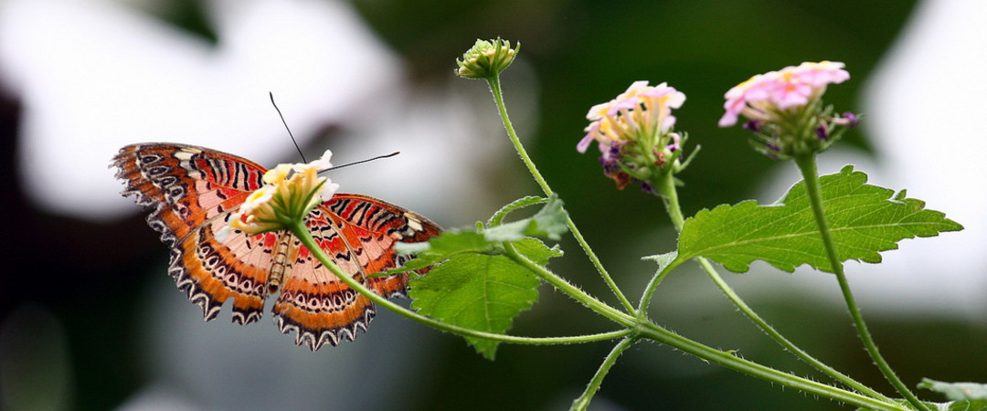 Visit the Butterfly Garden in Grevenmacher and discover a stunning variety of butterflies.