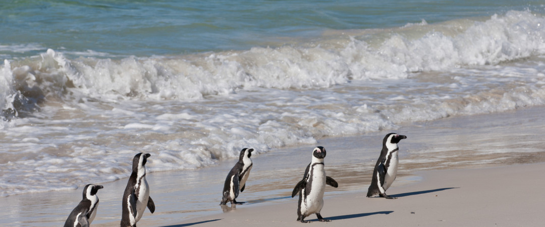 Stay at a hostel in the dramatically beautiful Cape Town, go snorkelling on the luscious beach and perhaps even spot a penguin or two!