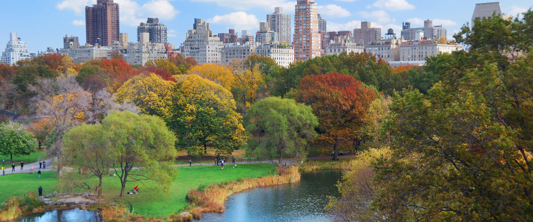 Take a stroll through Central Park, a green oasis in the heart of New York City.
