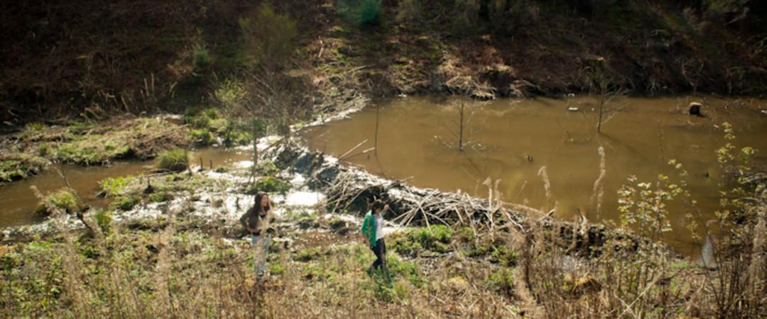 Paysage champêtre et barrage de castors en Ardenne belge