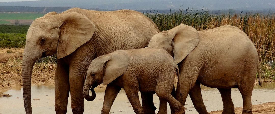 Start your journey in a big way by visiting Addo Elephant Park from Port Elizabeth.