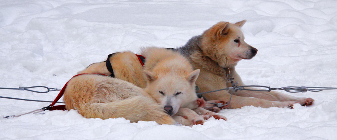 Take an amazing dog sledding tour of Borgarfjörður and beyond.