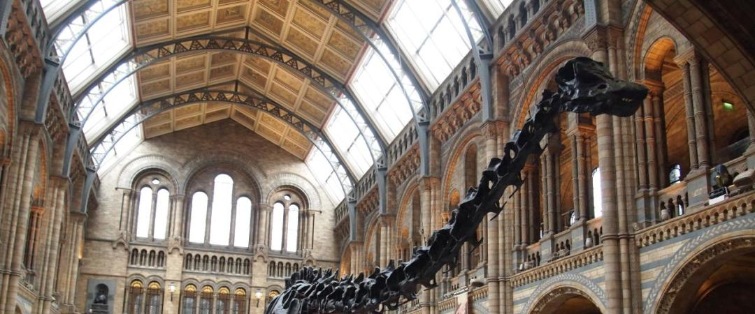 The Natural History Museum is world-renown for its fascinating exhibits - the skeleton of Dippy the Diplodocus greets you as you walk in.