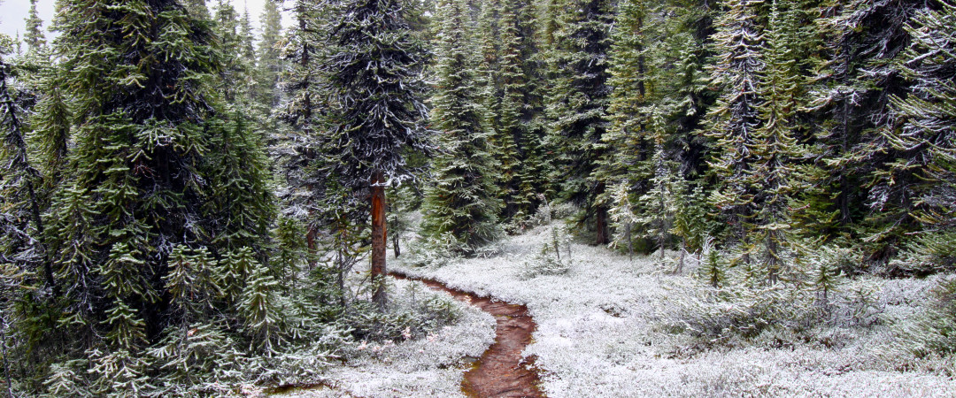 During summer, hike through forests rich with wildlife; during winter ski down mountains dusted with snow.