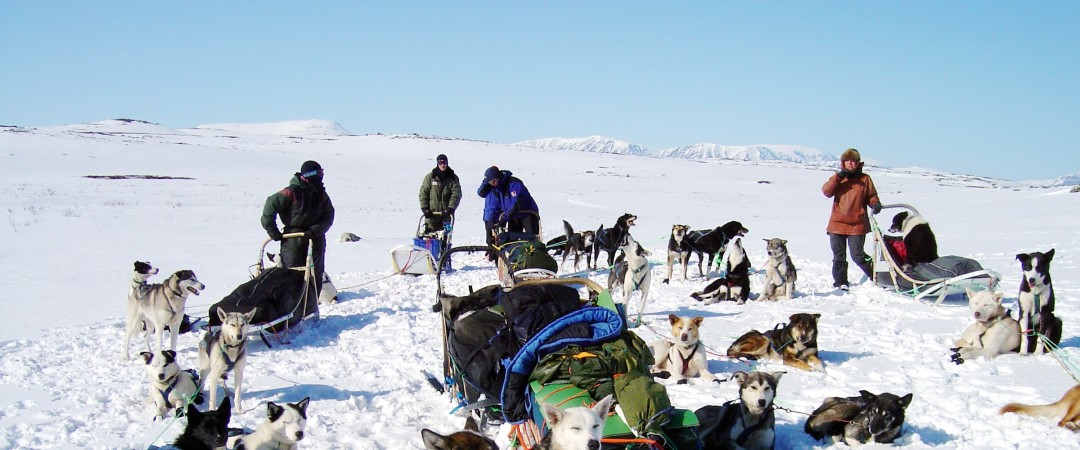 Visit Norway with your beloved ones and go on a thrilling dog sledding adventure.