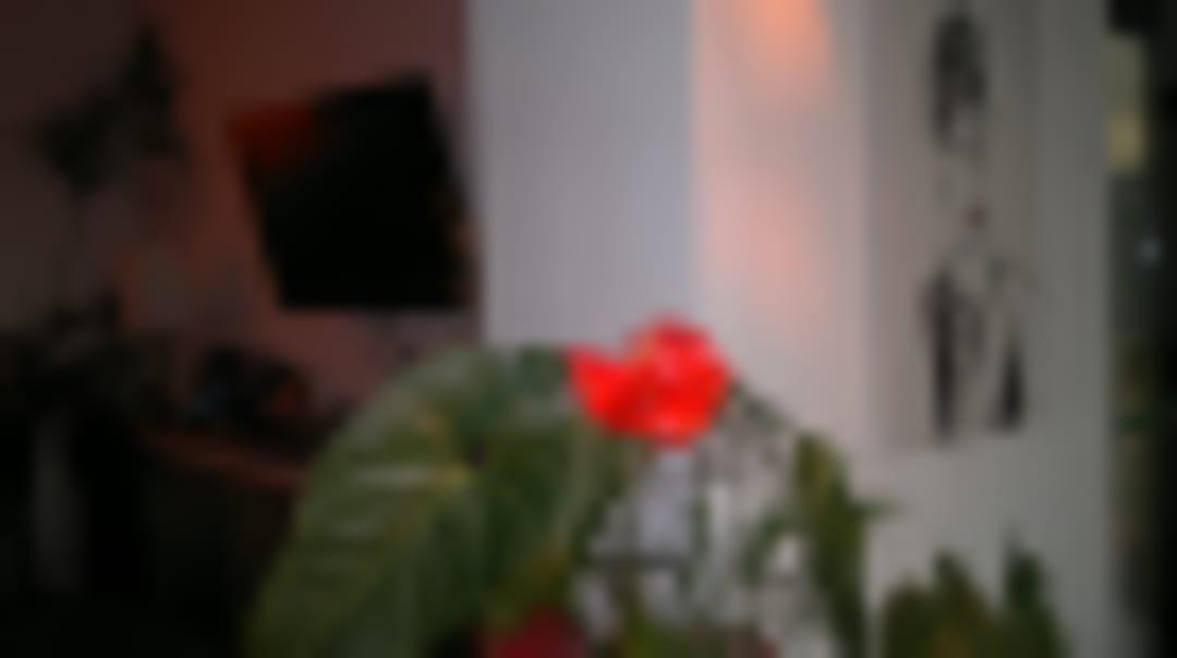 Hotel Sole e Mare - Lido di Camaiore - Italy - Youth Hostel
