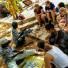 Jollyboys Backpackers & Camp - Livingstone - Zambia