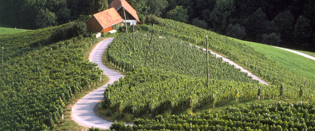 The local vineyards are a perfect place to spice up your visit of Maribor and enjoy a good glass of wine at the end of your day.