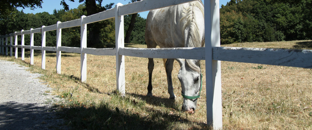 Lipica is the birthplace of the famous Lipizzaner white horse. You can interact with these beautiful animals for a discounted price if you have an HI membership card.